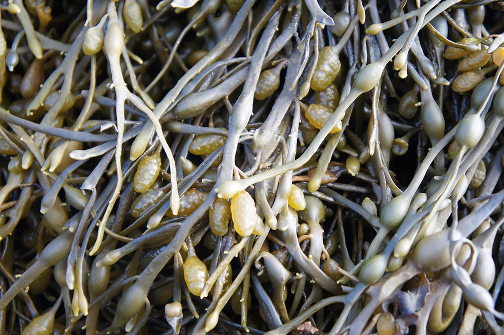 Seaweed at FI Europe