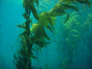 seaweed aware