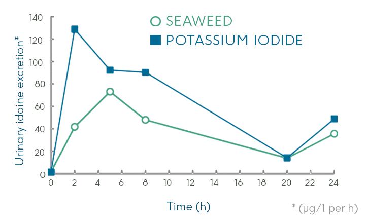 seaweed releases iodine more slowly